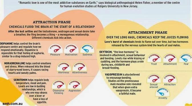 Studi: Cinta dan Nafsu Itu Kerja Otak, Bukan Hati!